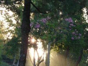 morning rays washing through branches